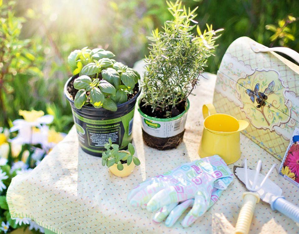 jardinier paysagiste à Aix en Provence