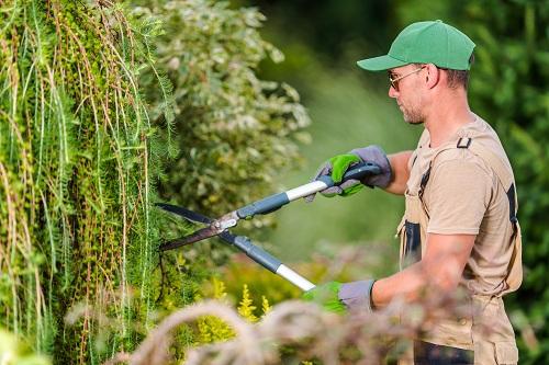 un jardinier paysagiste à Angoulême